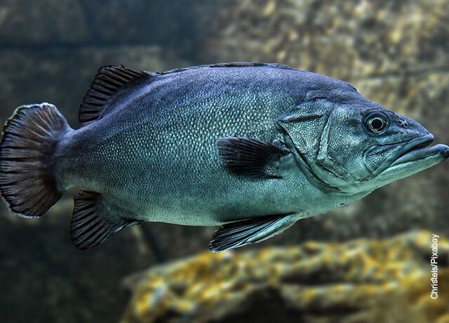 Foto de un animal acuático que ilustra para qué sirven las escamas de pescado