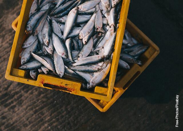 Foto de una faena de pesca