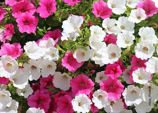 Foto de diversas flores blancas y moradas