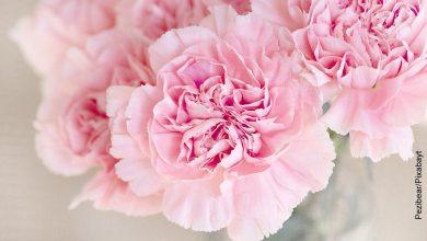 Foto de una rosa que muestra las plantas de exterior fáciles de cuidar