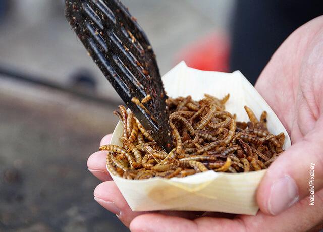 Foto de un plato con insectos comestibles