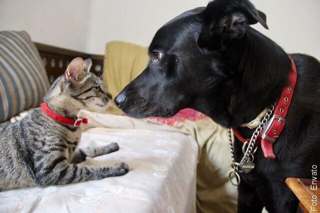 foto de perro y gato a punto de pelear