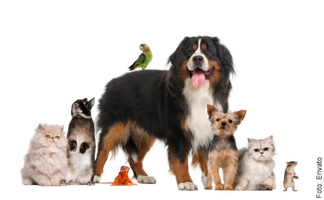 foto que ilustra varias mascotas