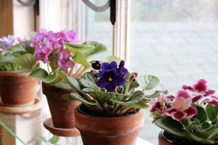 Foto de las plantas en varias macetas