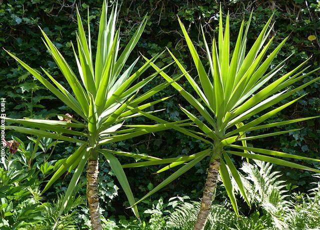 Foto de dos plantas perennes sembradas en un patio