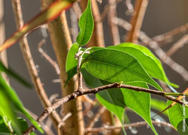 Foto de las hojas verdes de una planta perenne