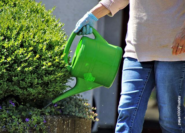 Foto de un hombre regando sus plantas en el jardín