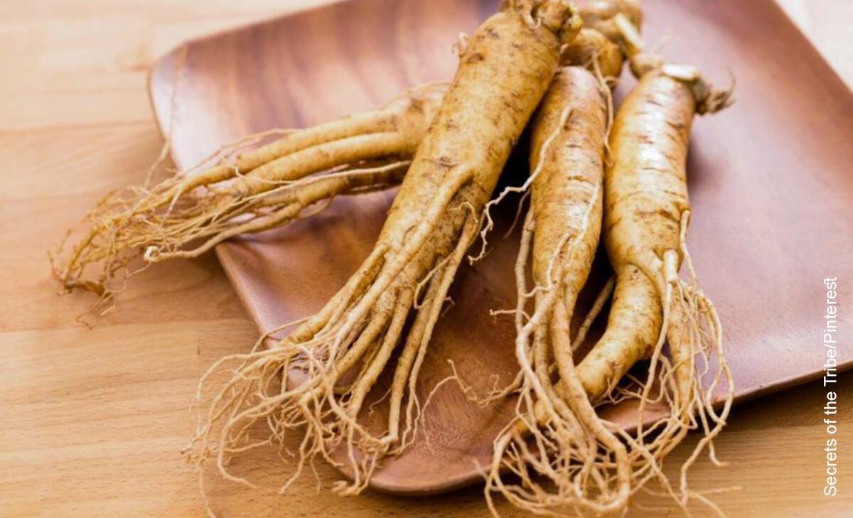 Foto de raíces de planta natural que muestran para qué sirve el ginseng