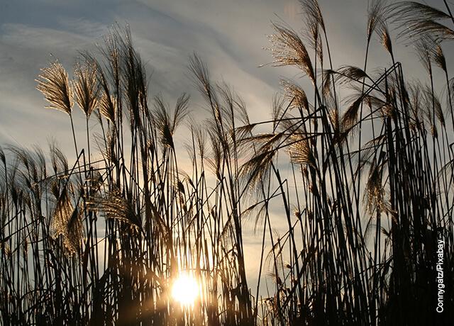 Fotos de un sembrado de hierbas al atardecer