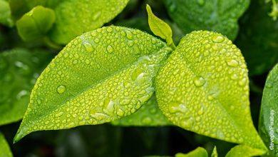 Foto de unas hojas verdes con agua que muestran para qué sirven las plantas