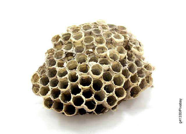Foto de un panal de abejas vacío que ilustra el propóleo para qué sirve