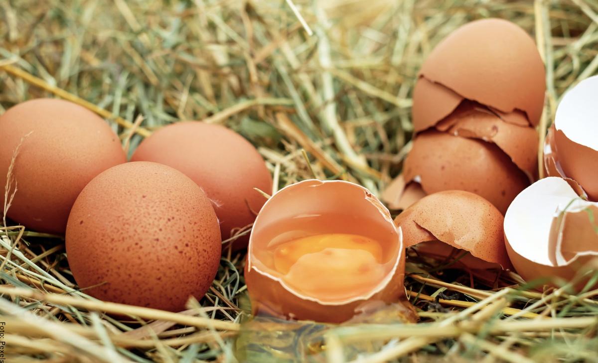 ¿Qué significa soñar con huevos? ¡Tienes suerte!