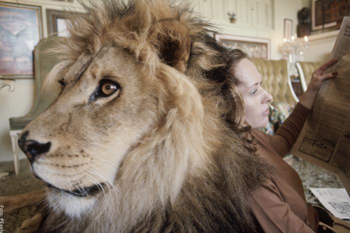 Foto de un león viviendo en una casa