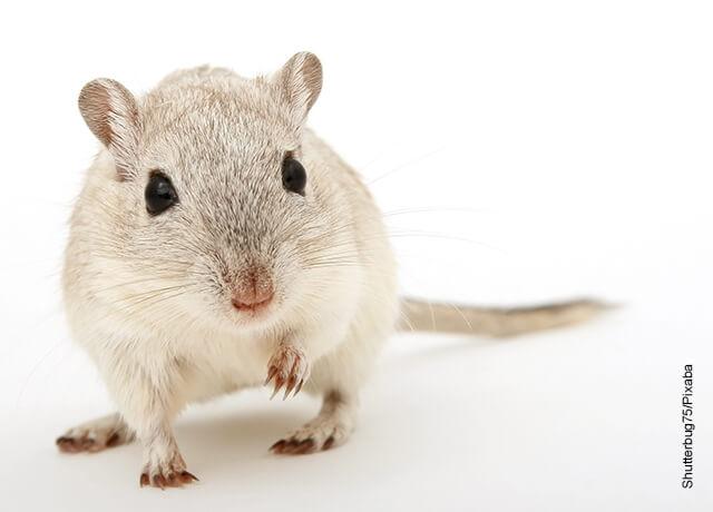 Foto de un ratón blanco sobre una mesa