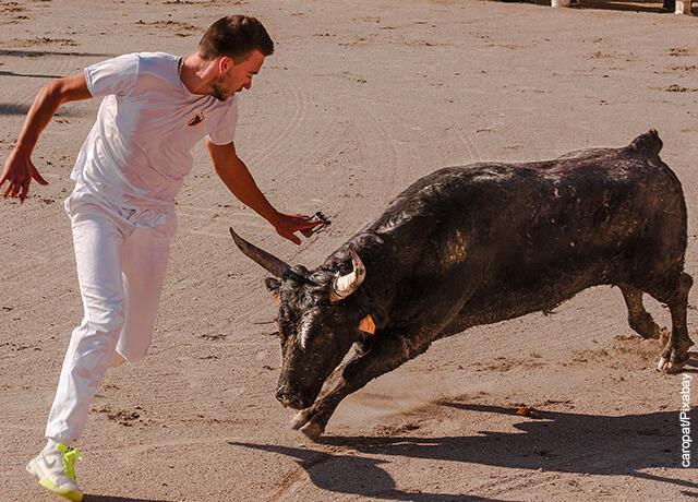 Foto de un toro pequeño correteando a un hombre