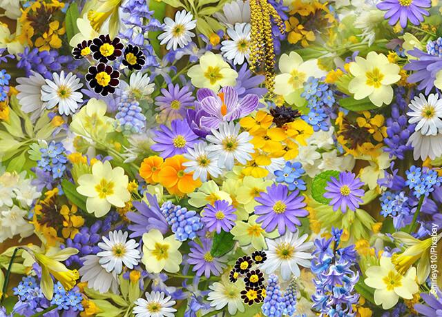 Foto de flores de colores vivos que ilustra lo que es soñar con flores