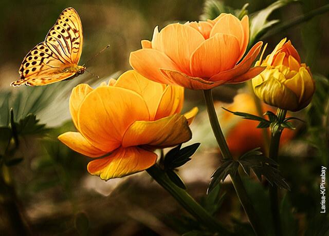 Foto de flores amarillas con una mariposa encima