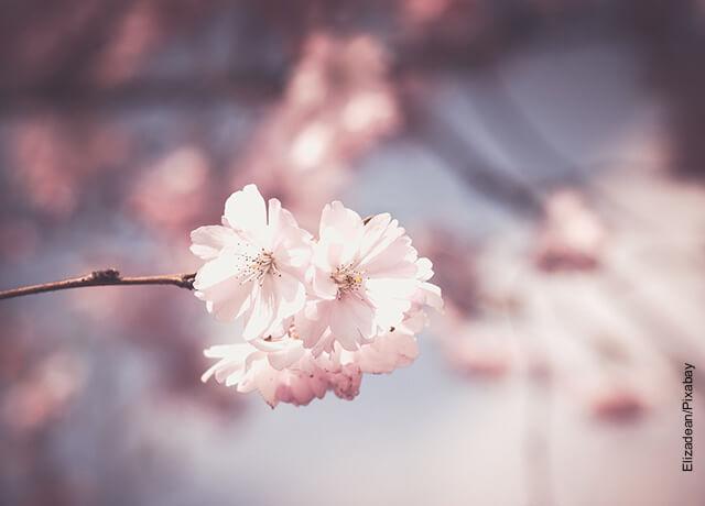 Foto de una rama de árbol de flores blancas