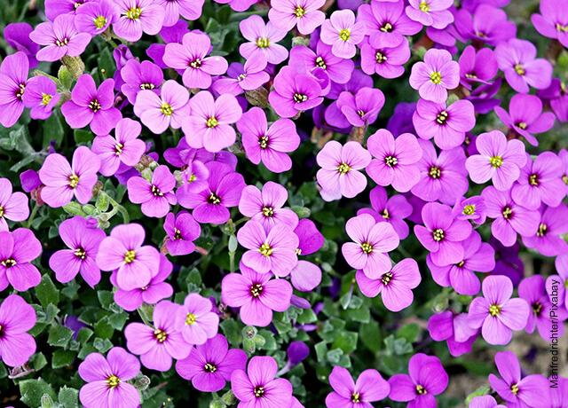Foto de varias flores pequeñas moradas al aire libre