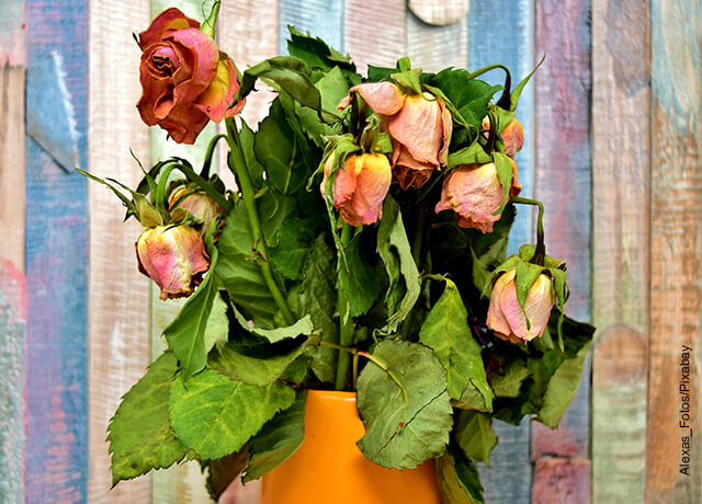 Foto de unas flores marchitas en un florero