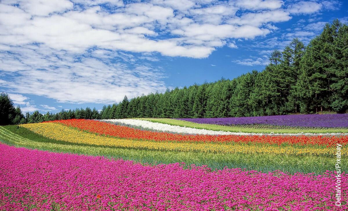 Foto de un campo con flores de muchos colores que muestra lo que es soñar con flores