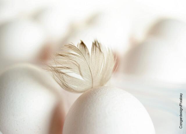 Foto de un huevo con una pluma que ilustra lo que significa soñar con gallinas