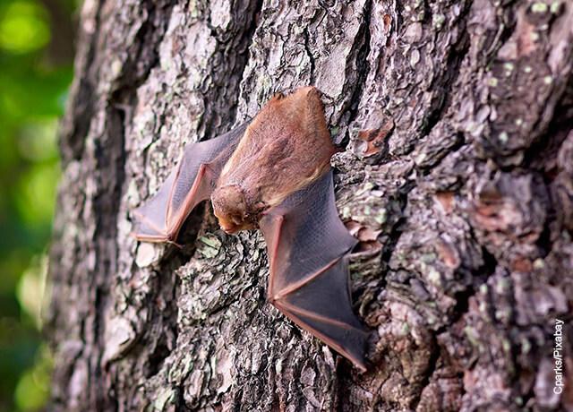 Foto de un murciélago café pegado a un árbol que muestra qué significa soñar con murciélagos