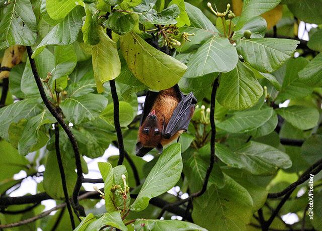 Foto de un murciélago comiendo en un árbol