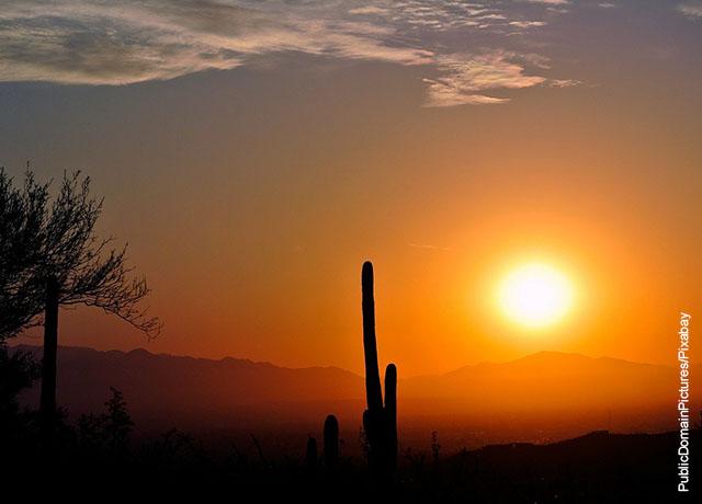 Foto del contorno de un cactus al atardecer