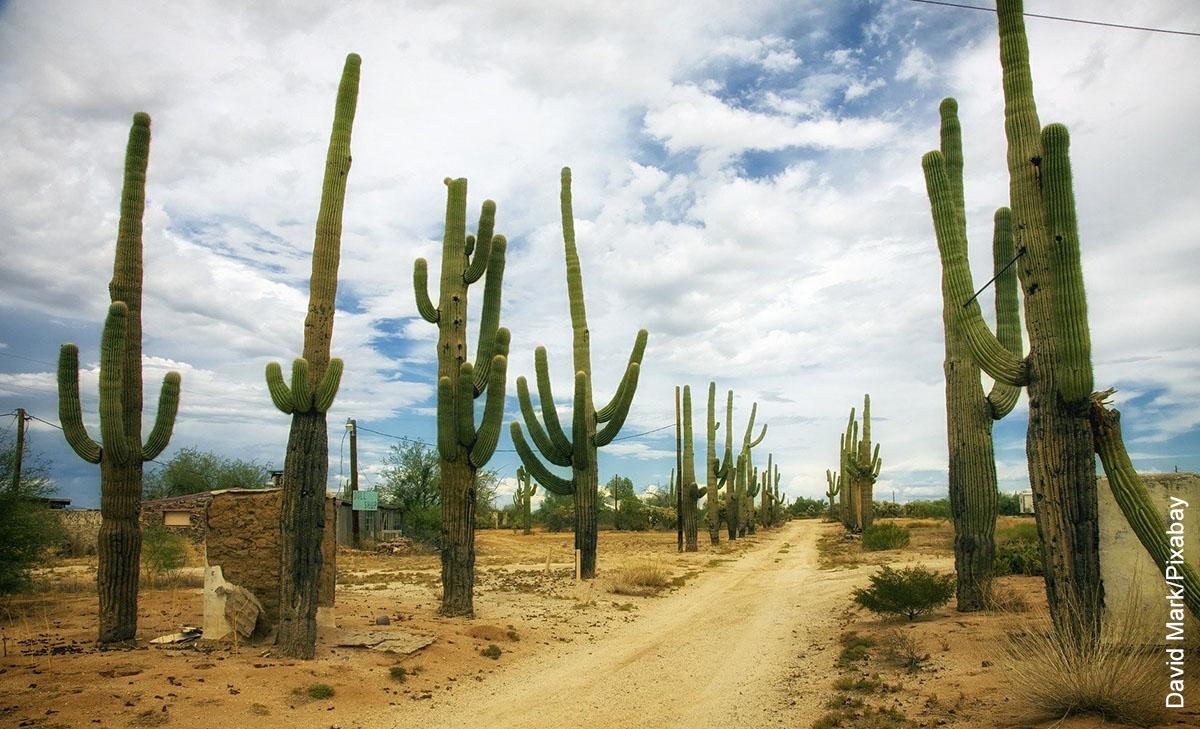 Foto de plantas en un carretera que representan los cactus del desierto