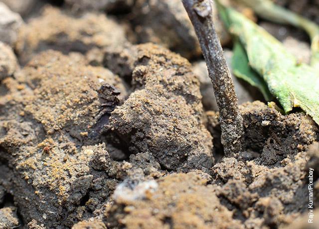 Foto de compost mezclado con tierra