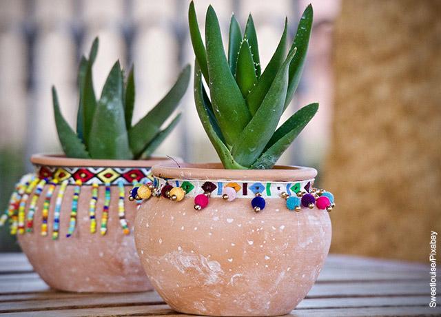 Foto de dos plantas suculentas en macetas