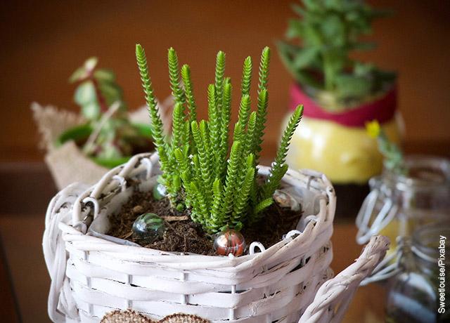 Foto de una planta pequeña adornando una mesa