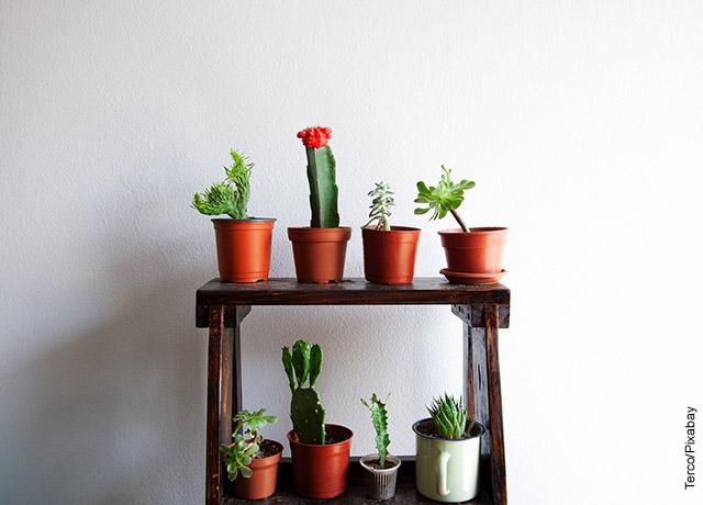 Foto de una repisa con varias plantas suculentas