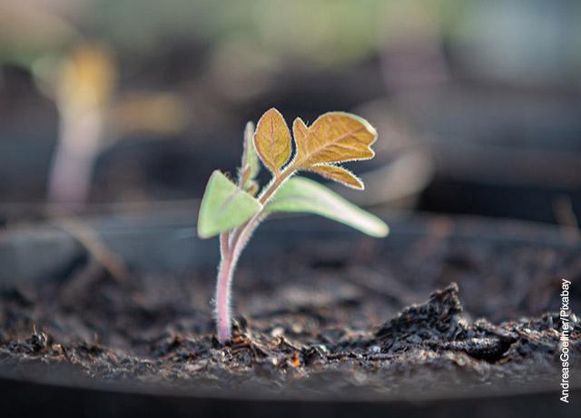 Foto de una planta naciendo en una maceta