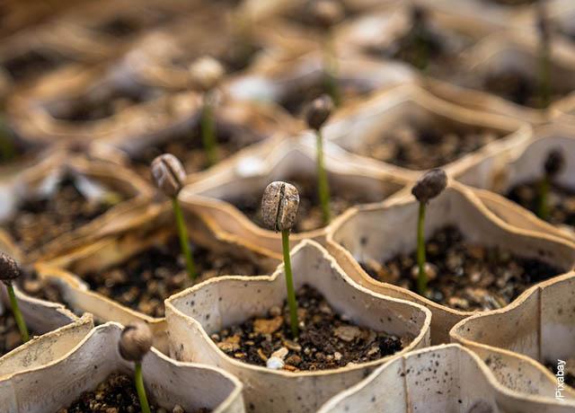 Foto de un semillero con pequeñas plantas