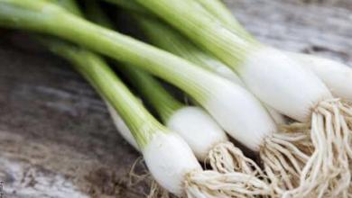 Cómo sembrar cebolla larga en un dos por tres