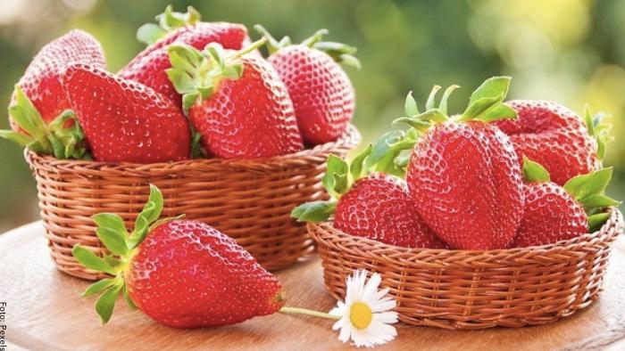 Foto de varias fresas muy rojas