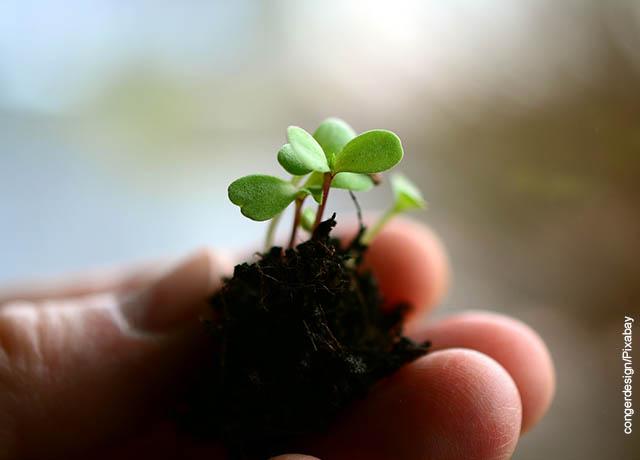 Foto de unos dedos sosteniendo una planta diminuta