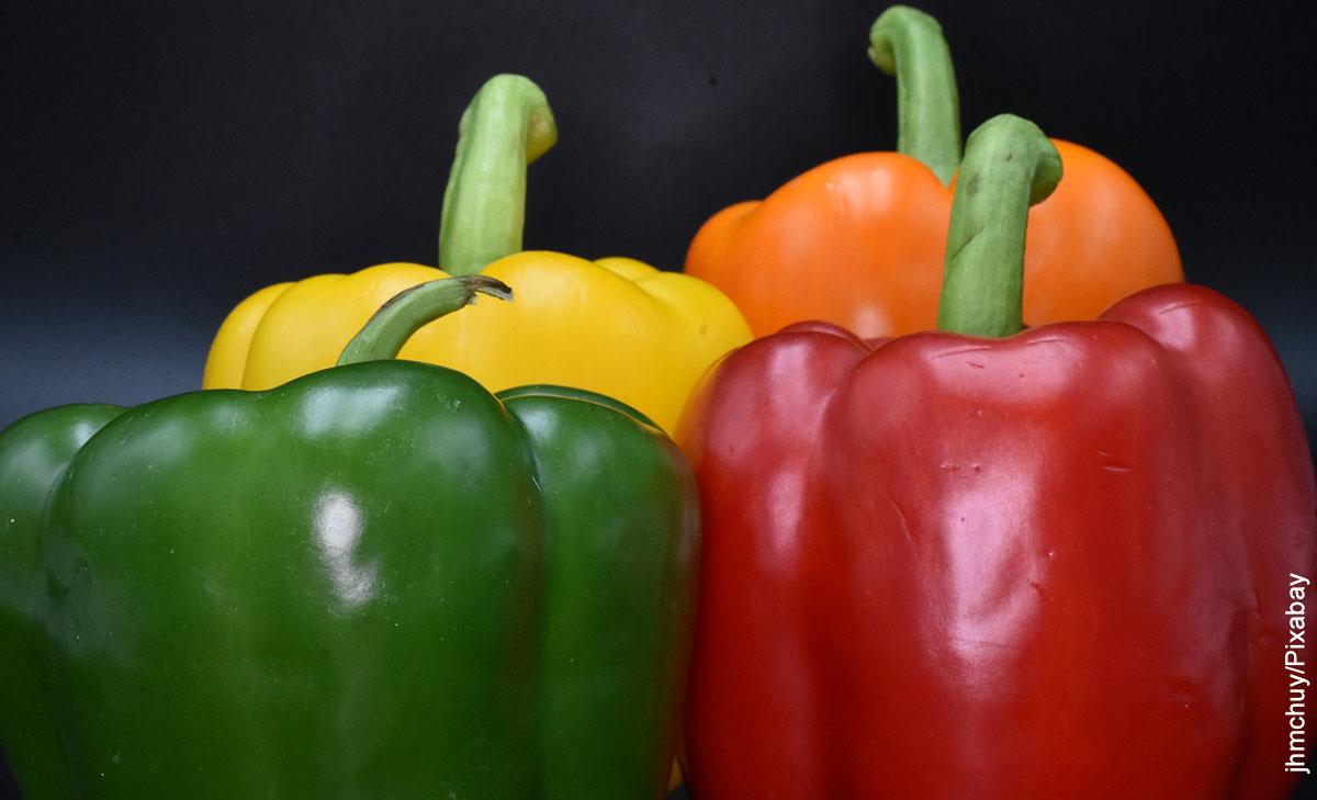 Foto de 4 pimientos de diferente color que ilustran cómo sembrar pimentón