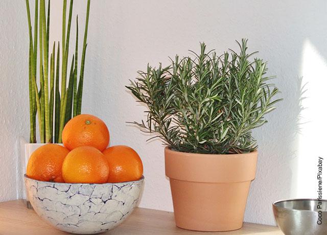 Foto de una maceta con hierbas aromáticas sobre una mesa