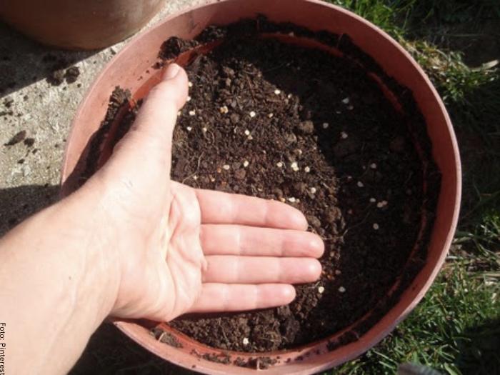 Foto de las semillas de tomate