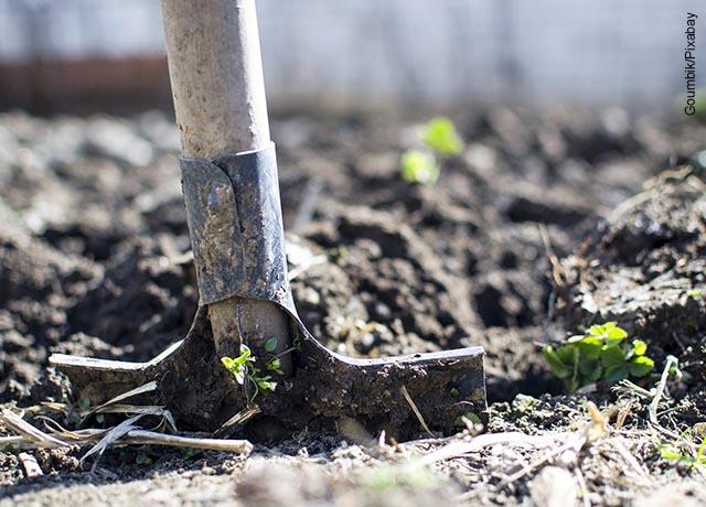 Foto de una pala para cavar en la tierra que muestra cómo sembrar un árbol