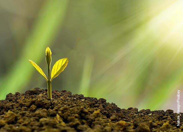 Foto de una planta naciendo del suelo