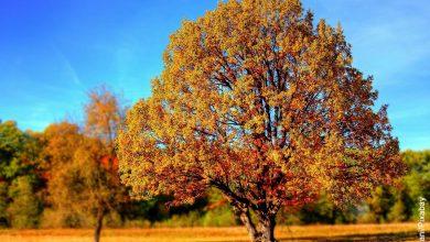 Foto de un parque en otoño que muestra cómo sembrar un árbol