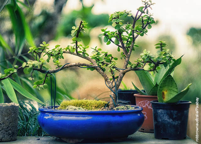Foto de varias plantas y un árbol pequeño que ilustra cómo sembrar un bonsái