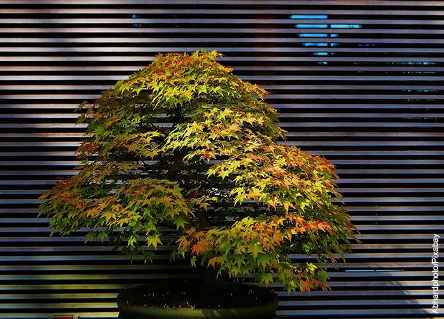 Foto de un bonsái de ramas amarillas y verdes