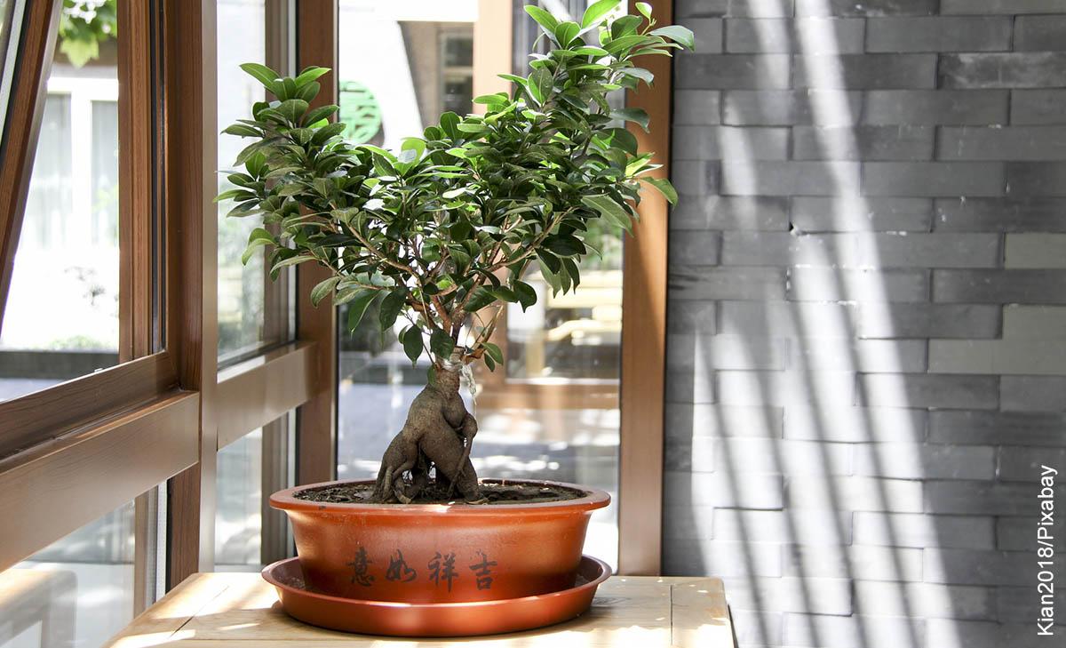 Foto de un árbol pequeño que ilustra cómo sembrar un bonsái