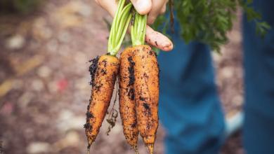 Cómo sembrar zanahoria en casa y disfrutarla en una ensalada