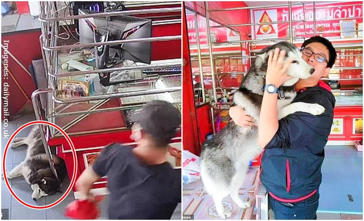 Fingió atraco para probar a su perro y su reacción generó risas